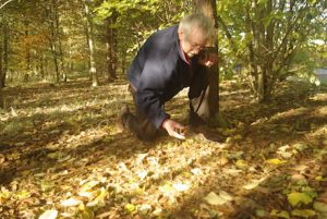 Gerry Loose harvesting seeds, photograph by kind permission of Morven Gregor